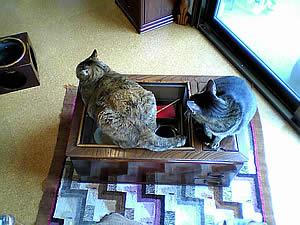 お客様の長火鉢と猫