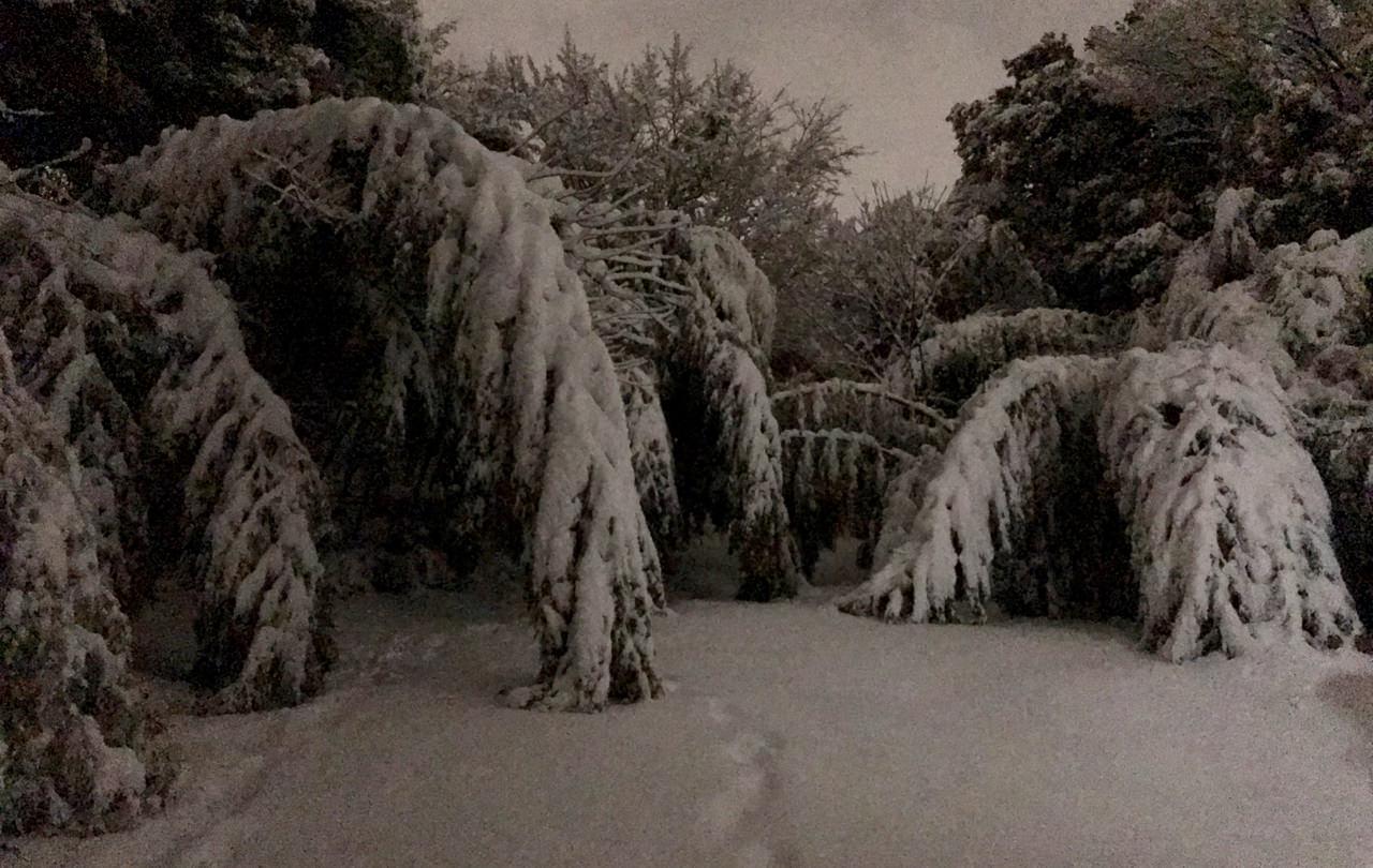 家の近所の雪