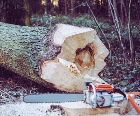 Lumberjackh 木こり