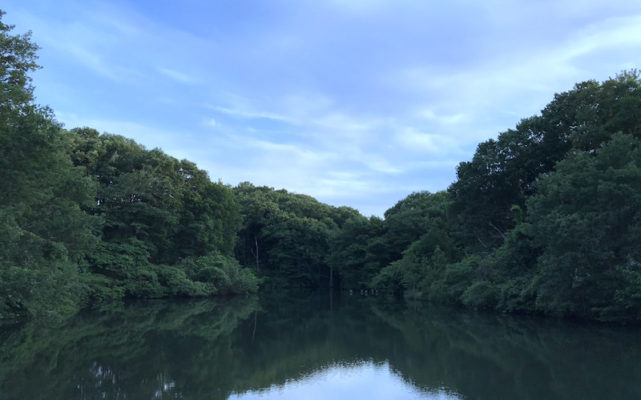 八王子の長池