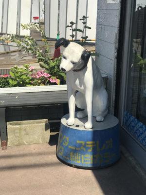 検見川のパナソニックの前にいたビクターの犬