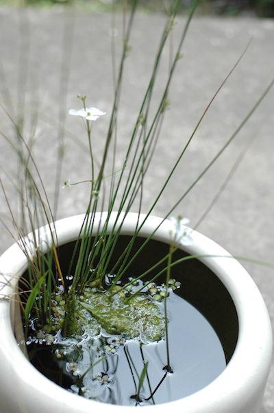 白い陶器の火鉢
